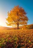 Árboles hermosos del otoño Fotos de archivo