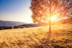 Árboles hermosos del otoño Fotografía de archivo