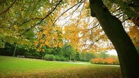 Árboles hermosos del otoño en parque metrajes