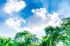 Árboles hermosos del parque sobre nublado fuerte azul Fotos de archivo libres de regalías
