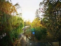 Árboles hermosos en Roses& x27; parque în Timisoara fotografía de archivo