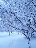 Árboles hermosos Nevado en invierno Imagenes de archivo