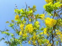 Árboles hermosos verdes y flor amarilla en fondo del cielo azul Fotos de archivo
