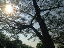 Árboles hermosos verdes y fondo del cielo azul Imagenes de archivo