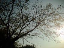 Árboles hermosos verdes y fondo del cielo azul Imagen de archivo