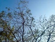 Árboles hermosos verdes y fondo del cielo azul Fotografía de archivo libre de regalías