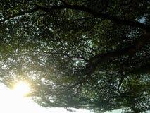 Árboles hermosos verdes y fondo del cielo azul Fotos de archivo