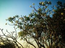 Árboles hermosos verdes y fondo del cielo azul Imágenes de archivo libres de regalías