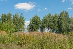 Árboles, hierba alta y cielo azul Imagen de archivo