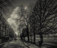 Árboles hivernales granosos en un parque Fotos de archivo