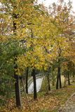 Árboles, hojas y camino Foto de archivo libre de regalías