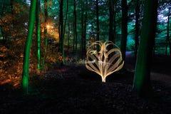 Árboles iluminados en bosque en la noche Foto de archivo libre de regalías