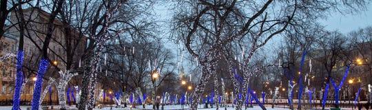 Árboles iluminados a los días de fiesta de la Navidad en la noche Fotografía de archivo libre de regalías