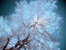 Árboles infrarrojos, Death Valley Fotos de archivo libres de regalías