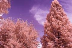 Árboles infrarrojos del parque en un soleado, día de verano imágenes de archivo libres de regalías