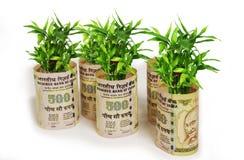 Árboles jóvenes de la planta de la fortuna envueltos en indio 500 rupias en el fondo blanco Imágenes de archivo libres de regalías