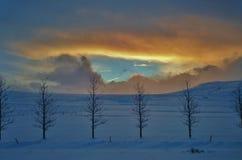 Árboles jóvenes islandeses del árbol Imagen de archivo libre de regalías