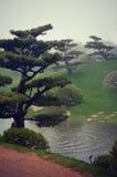 Árboles japoneses de los bonsais del jardín Imágenes de archivo libres de regalías