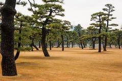 Árboles japoneses en Toyko, Japón Cerca del palacio imperial foto de archivo