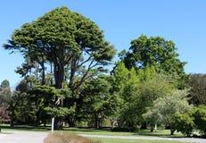 Árboles, jardines botánicos de Christchurch, Nueva Zelanda imagen de archivo