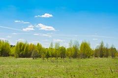 Árboles jovenes que crecen en campo en el cielo azul Foto de archivo