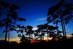 Árboles a la puesta del sol. Imagen de archivo