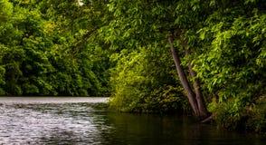 Árboles a lo largo de la orilla del lago Marburgo, en el parque de estado de Codorus Imagen de archivo