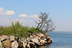 Árboles a lo largo de la orilla rocosa Fotos de archivo