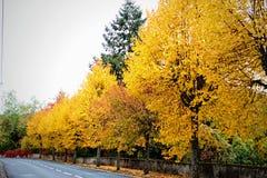 Árboles a lo largo de la ruta Fotografía de archivo