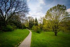 Árboles a lo largo de una calzada en el alto parque, en Toronto, Ontario imagen de archivo