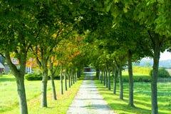 Árboles a lo largo del camino foto de archivo libre de regalías