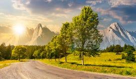 Árboles a lo largo del camino adentro a las montañas en la puesta del sol Imagen de archivo libre de regalías