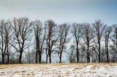 Árboles a lo largo del camino al borde del claro, tiempo del invierno Imagen de archivo libre de regalías