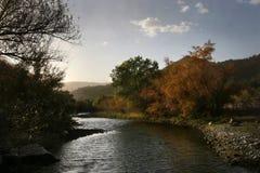 Árboles a lo largo del río de la sal Fotos de archivo libres de regalías