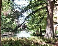 Árboles a lo largo del San Antonio Riverwalk imágenes de archivo libres de regalías