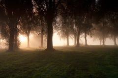 árboles Luz-inundados Fotografía de archivo libre de regalías