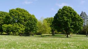 Árboles maduros en un parque público en Inglaterra imagen de archivo libre de regalías