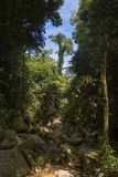 Árboles majestuosos en rocas y agua Imagenes de archivo