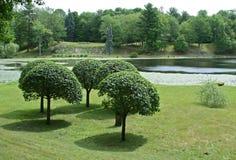 Árboles Manicured imagen de archivo libre de regalías