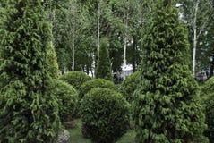 Árboles maravillosamente arreglados Fotos de archivo libres de regalías