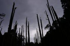 Árboles marchitados en bosque Fotos de archivo