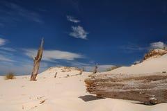 Árboles matados moviendo las dunas Fotos de archivo libres de regalías