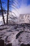 Árboles matados por las aguas termales de Yellowstone Imagenes de archivo