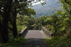 Árboles medios del asfalto de un puente del puente Imagen de archivo libre de regalías
