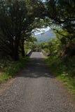 Árboles medios del asfalto de un puente del puente en el bosque Imagen de archivo libre de regalías