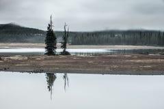 Árboles melancólicos Fotos de archivo