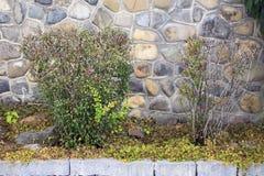 Árboles miniatura del jardín Fotos de archivo libres de regalías
