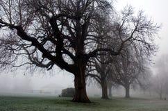 Árboles misteriosos del invierno en el parque de Diss Norfolk Imagen de archivo libre de regalías