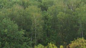 Árboles mojados en lluvia del bosque en septiembre almacen de video