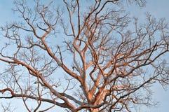 Árboles muertos Fotos de archivo libres de regalías